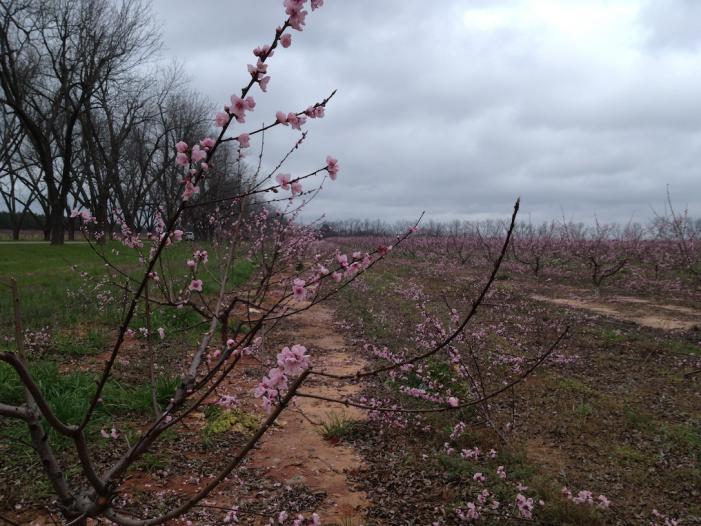 Prunings 2/29/12