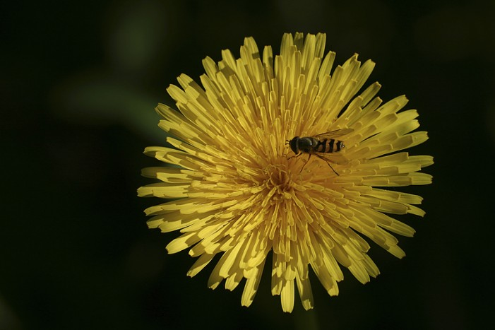 """Bee"" Good to Pollinators"