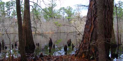 Aiken County Wildlife Area Opens to Public on Saturdays in September