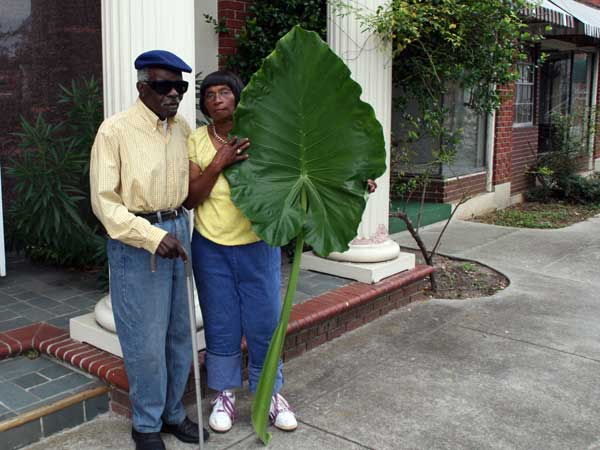 The Elephant Ear Story
