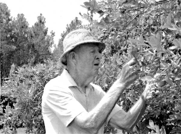 watson-blueberries