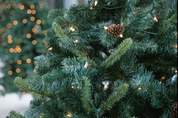 After the Holidays, Let Christmas Trees Benefit Fish and Wildlife