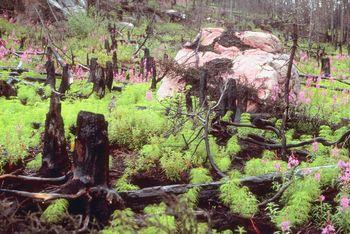 Prescribed Burns Restore Habitat, Improve Safety on Heritage Preserves