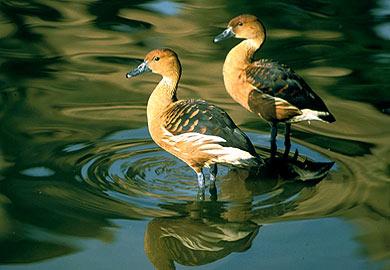 Late-Season Migratory Bird Season Continues