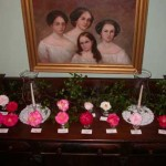 Four daughters of Francis Pickens, Ambassador and Civil War Governor, seem to be enjoying this array of camellias.