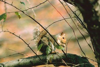 Rep. Bill Hixon and 14 Young Hunters Bag Squirrels on Recent Hunt