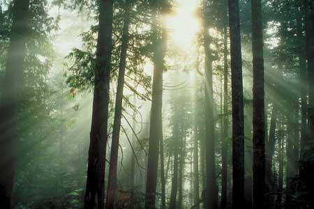USDA Forest Service Announces Summer 2014 Fee-Free Days