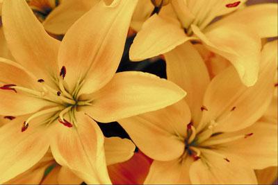 Park Seed Flower Day Celebration