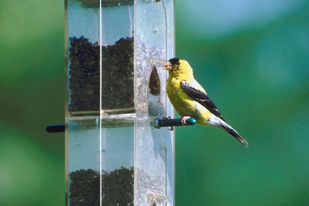 Birdfeeder Basics: Bring on Backyard Birds with the Right Feeders