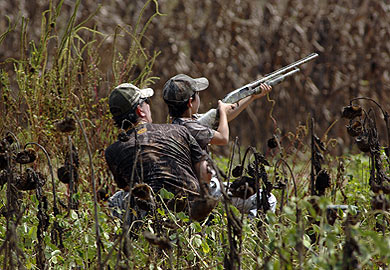 Forty-Eight Fields Available for Public Dove Hunting