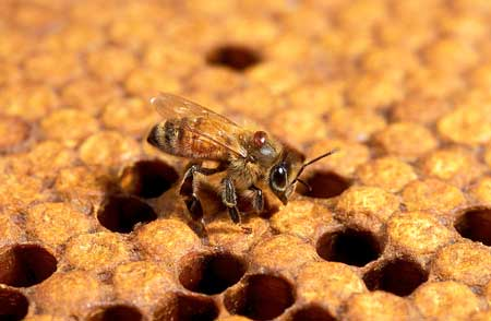 Clemson to be Abuzz with Beekeepers