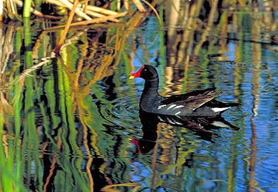 Early-Season Migratory Bird Seasons Approved