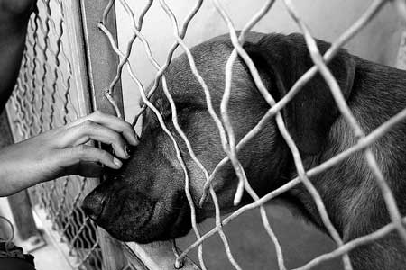 Council Work Session to Discuss Animal Shelter Locations