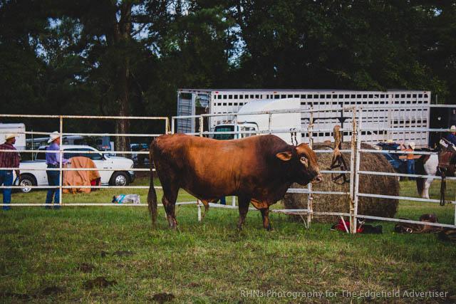 Sandy Oaks Pro Rodeo-31