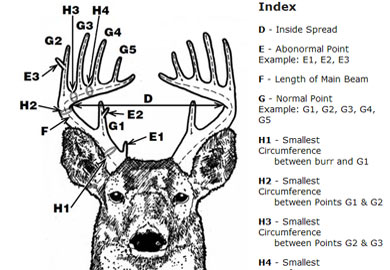 All-time Antler Records Update Now Available on DNR Website