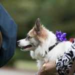Blessing of the Animals 2013-15