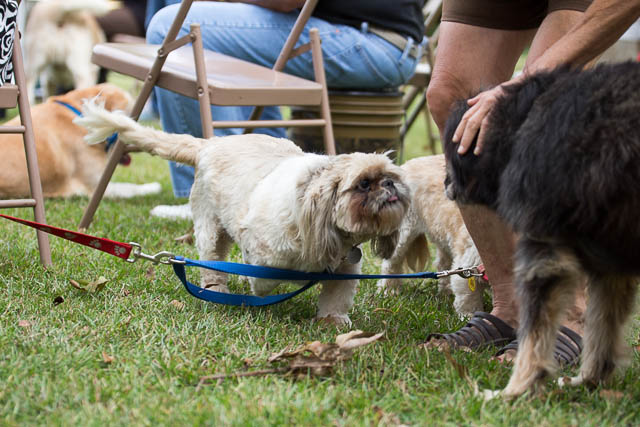 Blessing of the Animals 2013-16