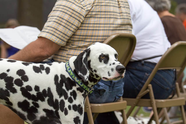 Blessing of the Animals 2013-48