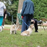 Blessing of the Animals 2013-5