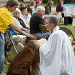 Blessing of the Animals 2013-60