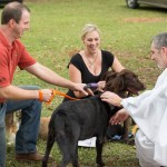 Blessing of the Animals 2013-64