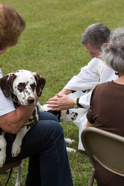 Blessing of the Animals 2013-88