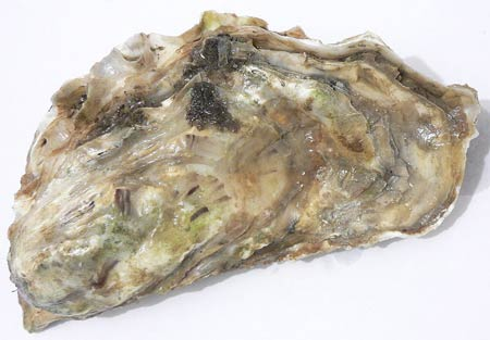 ECCC Plans Oyster Roast to Benefit Schools