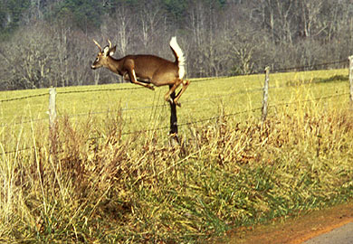 Motorists Need to Watch for Deer on State Roads