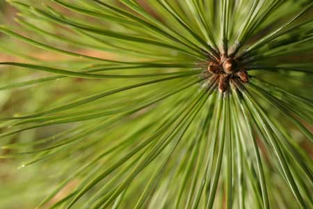 'Longleaf 101' Offered at Cheraw State Park Feb. 18-20