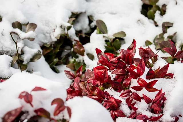 29Jan14 Snow Day-16
