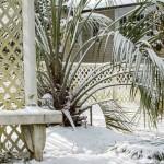 29Jan14 Snow Day-3