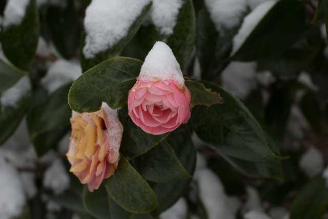 29Jan14 Snow Day-36