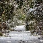 29Jan14 Snow Day-9