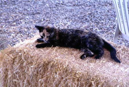 Cat Exposes Oconee County Woman to Rabies