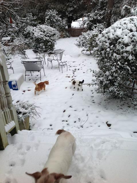cats-snow