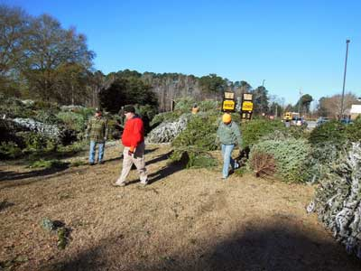 1,500 Christmas Trees Available to Anglers at Thurmond Lake