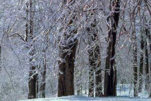 ice-storm