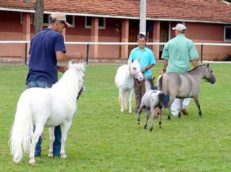 Miniature Pony Killed By Dogs