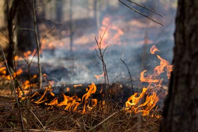 Growing-Season Burns a Natural Ecological Process in S.C.