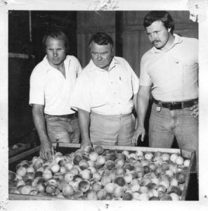 The Yonces today running the J. W. Yonce peach business: left to right, Larry, his father J. W. Yonce, Jr., and Sonny.
