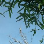 white-bird2