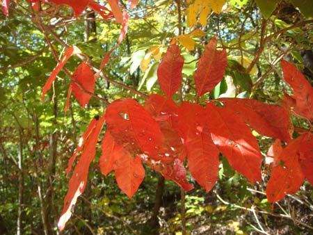 Fall Colors Could Peak Sooner than Normal, says Clemson Forest Ecologist