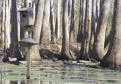 Wood Duck Box Applications Available Until Nov. 1