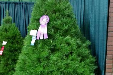 Local Christmas Tree Wins Best in Show