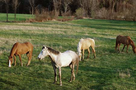 Tips For Winter Weight Loss in Horses