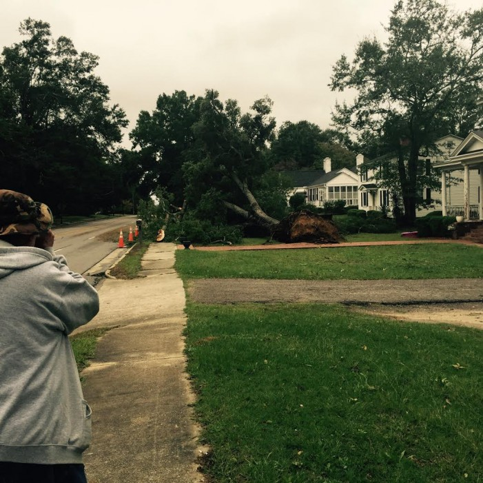 Downed Trees in Johnston
