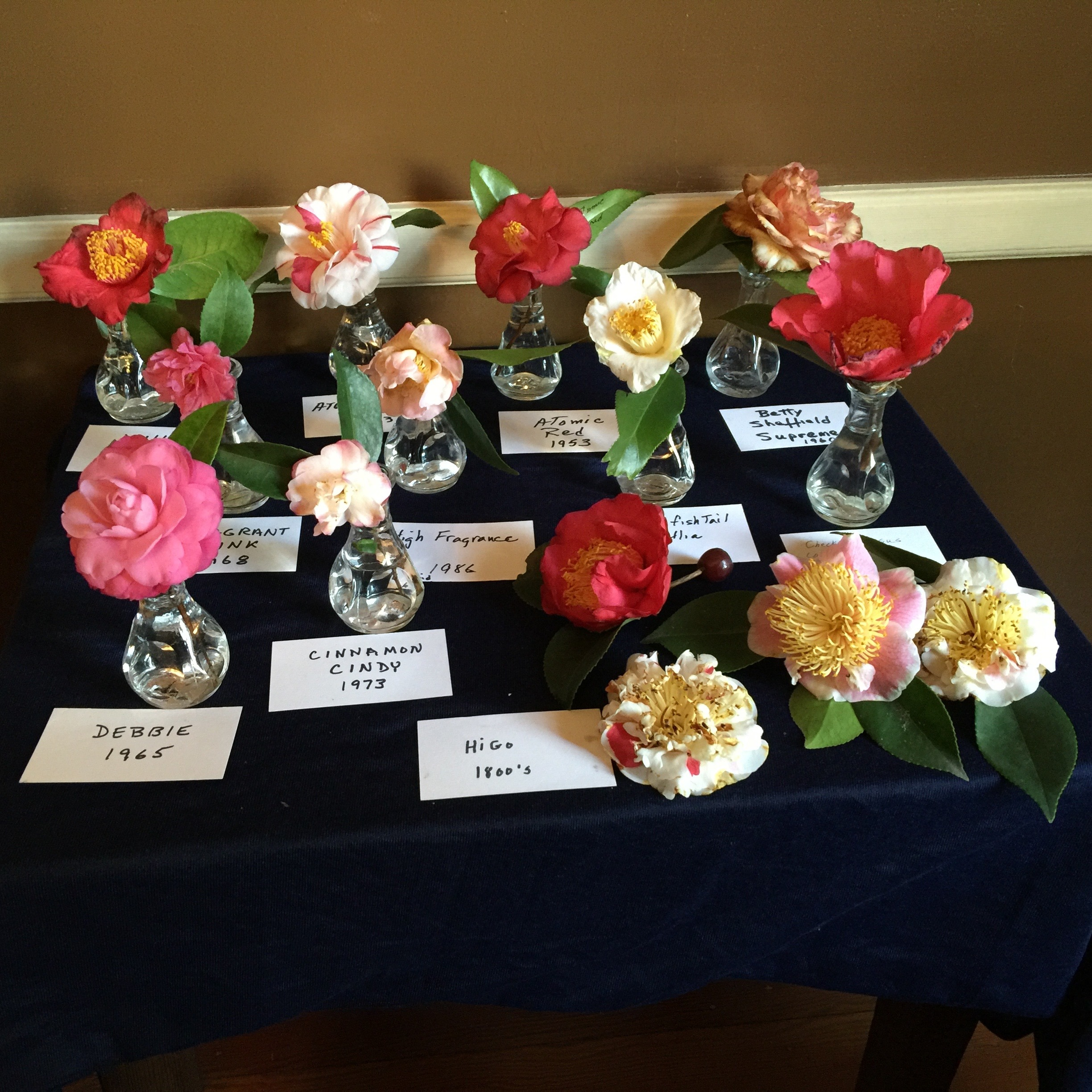 Tabletop holding individual blooms classified by name and year of naming.