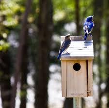 Bluebird boxes at the National Wild Turkey Federation.