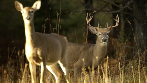 Statewide deer harvest decreases in 2015