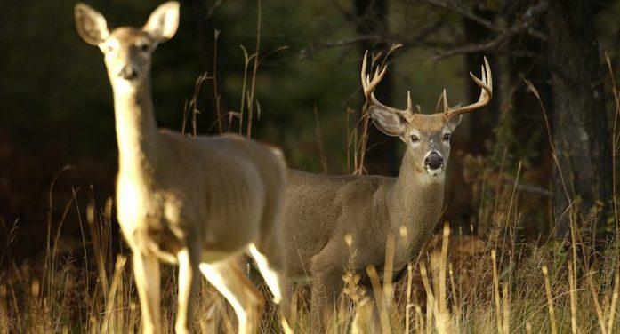Statewide deer harvest decreases in 2015